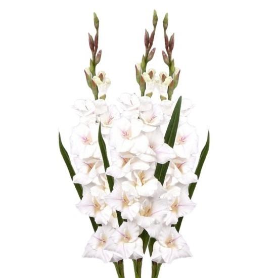 3x Gladiool bloem 102 cm wit