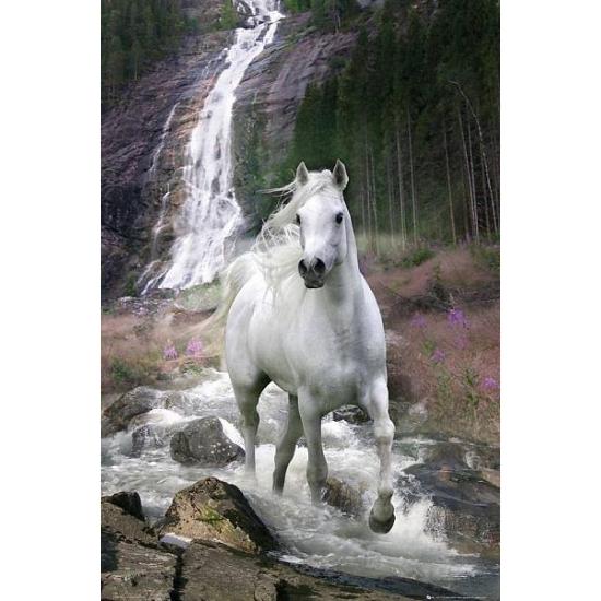 Decoratie poster waterval met paard