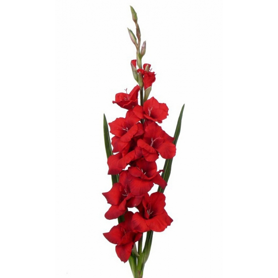 /feestartikelen/thema-feestartikelen/sinterklaas/surprises-materiaal/decoratie-materiaal/kunstbloemen--planten/kunstbloemen/alle-kleuren-soorten-kunstbloemen